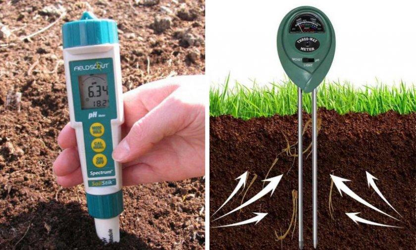 Как правильно выращивать смородину и ухаживать за ней?